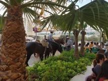 Feria 7